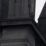 falcon-watch-6-26-11-001-b
