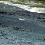 morning-watch-6-15-11-025-river-birds