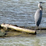 morning-watch-6-27-11-022-gbh