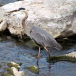 morning-watch-7-26-11-gbh