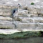 morning-watch-8-2911-014-gbh
