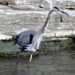 morning-watch-8-2911-015-gbh