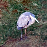 morning-watch-10-08-11-005-gbh