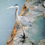 morning-watch-10-08-11-014-gbh