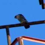 thanksgiving-morning-watch-11-24-11-022-b