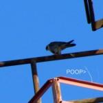 thanksgiving-morning-watch-11-24-11-024-b-poops