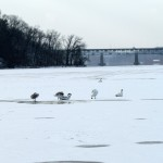 img_0456-irondequoit-bay-bridge-in-background