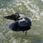 img_4888-gbh-taking-off
