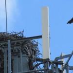 img_6337-avon-osprey