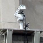 img_7461-o-squawking