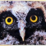 img_0197-toms-owl-pic