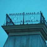 Starlings on Widows Walk