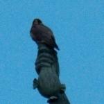 Beauty on the Mercury Statue
