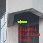 Beauty in OCSR Elevator Shaft - 12/23/12
