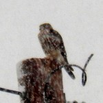 Merlin on Westphal Rd. - 12/29/12