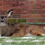 img_4322-deer-at-bs