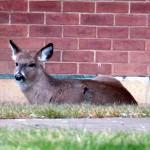 img_4338-deer-at-bs