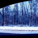 Snowy Woods - 1/23/13