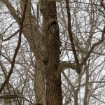 img_9435-find-the-owl