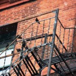 Starlings on top of fire escape on Wilder Bldg - 3/17/13