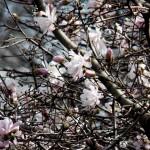 Spring Flowers 4/25/13