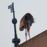 img_0020-gbh-on-rundell-library-roof