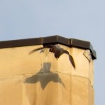 img_9328-dc-takes-off-to-nb-with-prey
