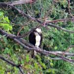 img_0003-osprey
