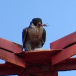 img_0127-talk-about-a-foot-in-your-mouth