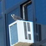 Juvie on Seneca Towers 9-29-13