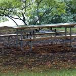 Smart Sparrows Escaping the Rain 9-21-13