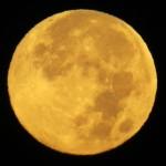 img_0002-harvest-moon