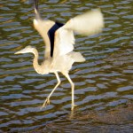 img_0006-gbh-taking-off
