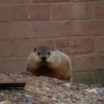 Groundhog at BS - I felt like I was being Watched! 10-19-13