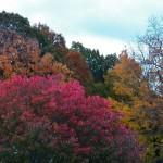 7-fall-foliage-10-23-13