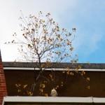Pigott on the Tree Ledge at BS 10-20-13