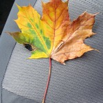 img_0001-many-colors-in-one-leaf