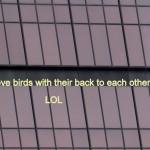 img_0004-love-birds