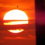 img_0026-sunrise-with-the-birds