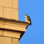 img_0033-ko-bird