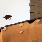 img_0038-beauty-off-se-wing-ledge
