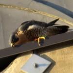 img_0057-feaking-clean-off-that-beak
