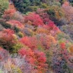 img_0074-river-foliage