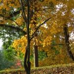 img_0077-fall-2013