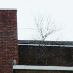 Pigott on Tree Ledge at BS 11-23-13