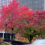 img_0010-foliage
