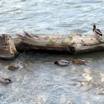 img_0031-quack-quack-quack-quack-quack