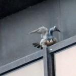 img_0054-angel-wings
