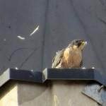 img_0085-feathers-everywhere