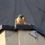 img_0091-get-off-my-beak
